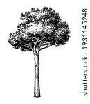 hand drawn vector illustration... | Shutterstock .eps vector #1931145248