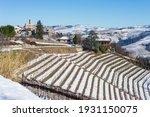 Italy Piedmont  Row Of Wine...