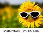Sunflower Wearing Sunglasses ...