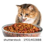 Cat Eating Too Much Dry Food....