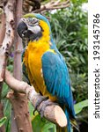 macaw in victoria butterfly... | Shutterstock . vector #193145786