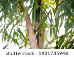 green bamboo plants in the... | Shutterstock . vector #1931735948