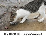 this is a pretty domestic cat  | Shutterstock . vector #1932012275