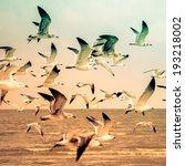 Birds On A Beach  Retro...