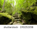 Ancient Black Forest Hiking...