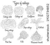 cabbage varieties. free style... | Shutterstock .eps vector #1932734852