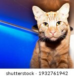 Orange Tabby Cat Looking Out