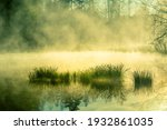 A Beautiful Flooded Wetlands...