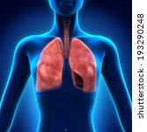 human respiratory system   Shutterstock . vector #193290248