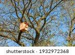 A Beautiful Wooden Birdhouse...