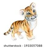 Tiger Baby  Tiger Cub...