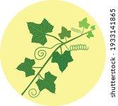 Ivy Gourd Leaves Vector...