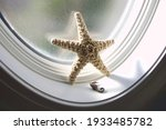 Starfish And Seahorse In The...