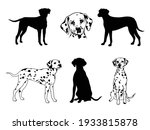 Set Of Dalmatian. Collection Of ...