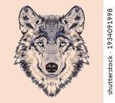 Big Beautiful Wild Blue Wolf...