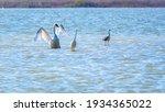 Graceful Water Birds  White...