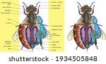 vector illustration of the...   Shutterstock .eps vector #1934505848