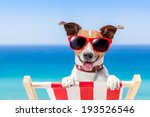 Dog Relaxing On A Fancy Deck...