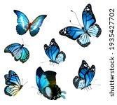 Flock Of  Butterflies On White...