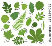 Big Set Of Green Leaves Of...