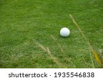 Golf Ball In The Green Field ...