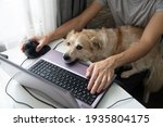 Closeup White Dog On The Lap Of ...