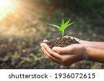 Female Hand Holding Plant...
