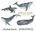 Watercolor Whales Clipart  Sea...