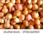 Small photo of onions and their husks. Onion texture with yellow peel close-up. Onions with golden husks on the counter in the store. onion with roots among onion skins, top view close-up in selective focus