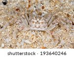 crab on the sand. nature of the ...   Shutterstock . vector #193640246