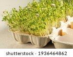 Easter  Cress In Eggshells  Egg ...