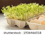 Cress In Eggshells  Watercress...