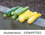 Small photo of Harvesting courgettes, green courgette defender and yellow courgette sunstripe freshly picked in a garden, UK