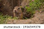 The Little Ground Squirrel...