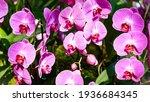 Orchid Garden. Orchidaceae....
