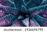 Close Up Of A Teal Succulent...