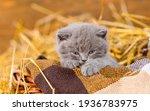 Kitten Sleeps In A Basket On A...