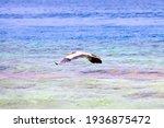 Grey Heron Flying Over...