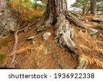 Glen Strathfarrar In Autumn.  ...