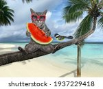 A Gray Cat In Sunglasses With A ...