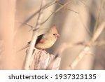 Bird Feathers Beak Beautiful...