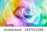 Rainbow Rose Background....