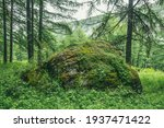 Scenic Forest Landscape With...