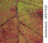 leaf closeup | Shutterstock . vector #19377310