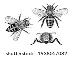 bee and honey. mead and insect.... | Shutterstock .eps vector #1938057082