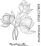 white lily  floral arrangement. ... | Shutterstock .eps vector #1938117805