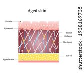 aged skin layer. structure... | Shutterstock .eps vector #1938169735