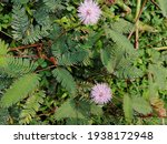 Garden Flower Green Leaves With ...