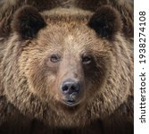 Portrait Brown Bear In The...