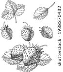 strawberry vector drawing set.... | Shutterstock .eps vector #1938370432
